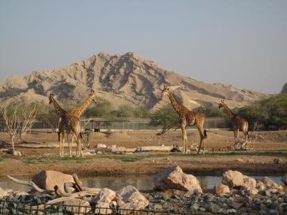 Аль-Айн зоопарк